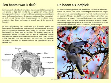 proefopzet folder bomen wandeling botatuin Kerkrade_hs_20200206